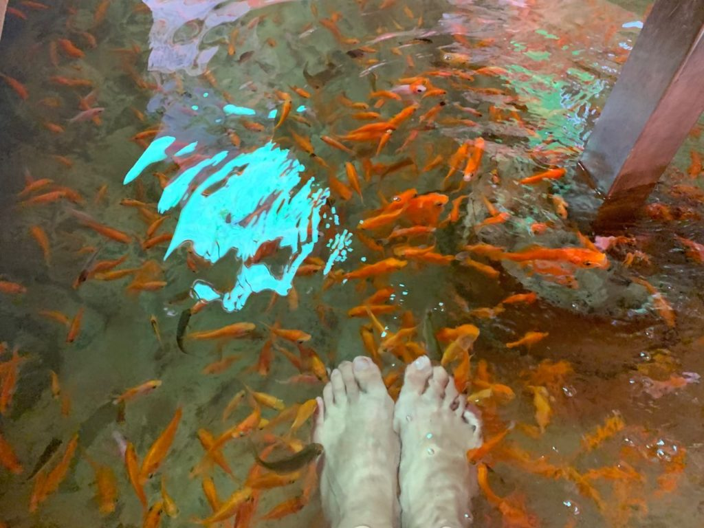 大樹下礁溪溫泉魚